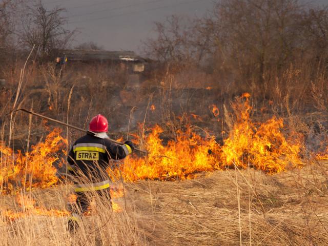 Płonące, suche trawy. Po prawej stronie strażak od tyłu w czerwonym kasku