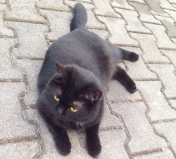 Kot czarny zaginął w Wiązownie