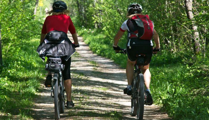 Dwoje rowerzystów pokazanych od tyłu jedzie leśną drogą