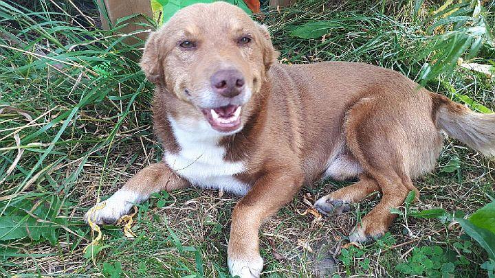 Pies o rudawej sierści znaleziony w Porębach