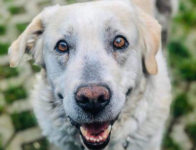 zdjęcie pies adopcja fighter