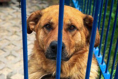 zdjęcie atom pies adopcja