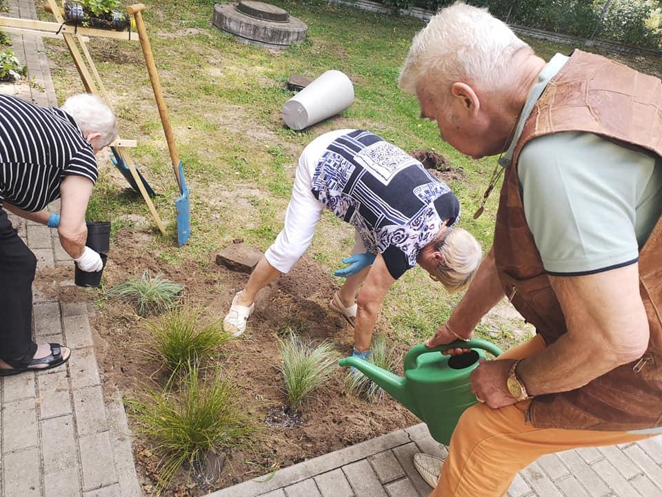 Seniorzy sadzą rośliny w ogordzie przy Domu Dziennym Senior+
