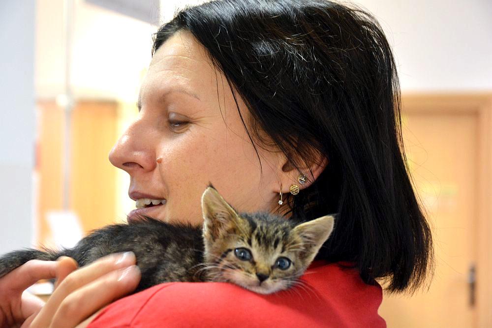 Kobieta w czerwonej bluzce. Kobieta trzyma na ramieniu małe kotka