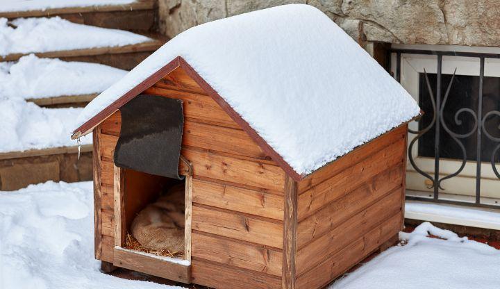 Buda dla psa. Dach przysypany śniegiem