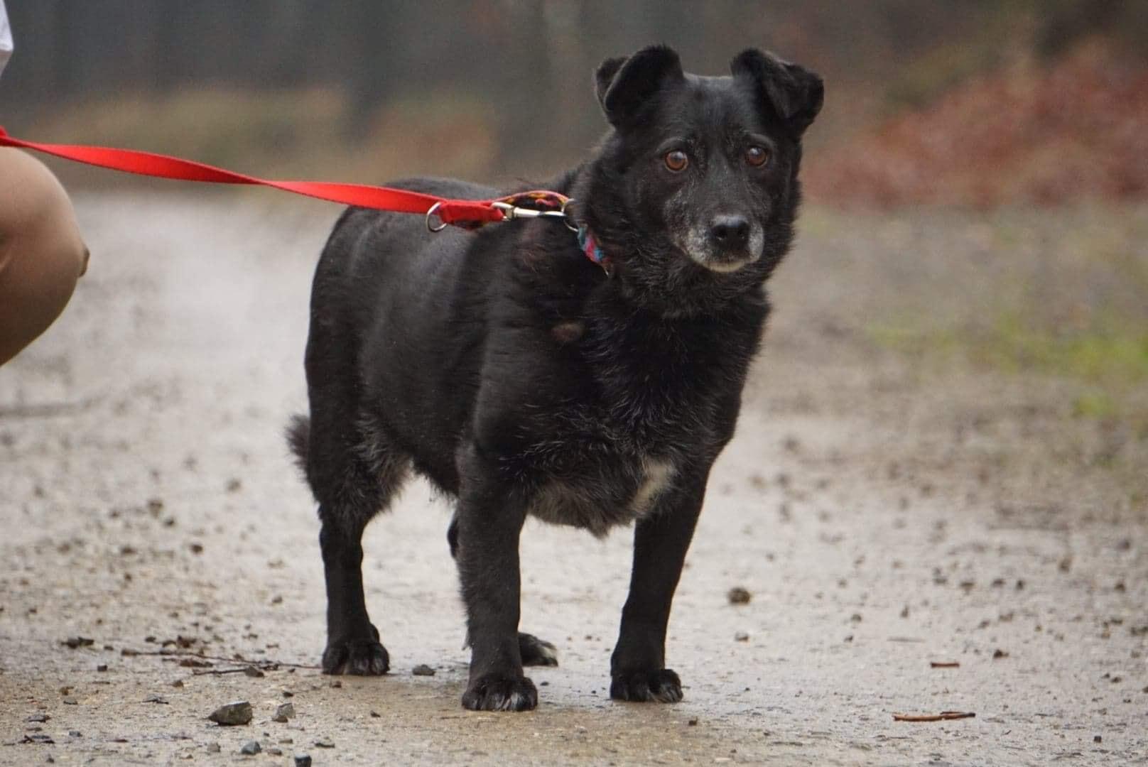 Czuszka psiak ze schroniska dla zwierząt w Celestynowie