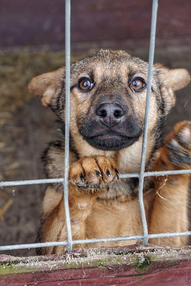 Lima - pies oparty o kratę ze Schroniska dla Zwierząt w Celestynowie do adopcji