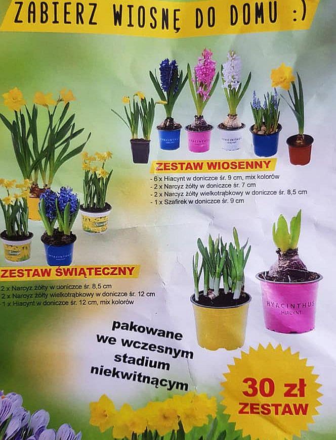 Plakat z zestawami wiosennych kwiatów