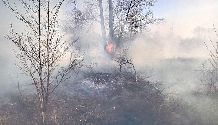 Wypalanie łąk. W tle widać ogień i silne zadymienie wokół drzew.