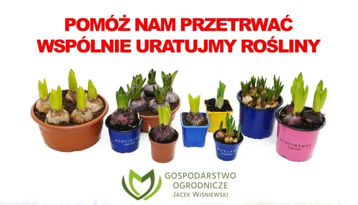 Plakat Gospodarstwa Ogrodniczego Jacek Wiśniewski z napisem Pomóż nam przetrwać wspólnie uratujmy rośliny. Na zdjęciu kwiaty w kolorowych doniczkach