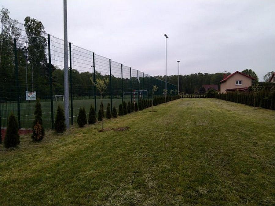 Młode drzewka posadzone wZakręcie przy boisku