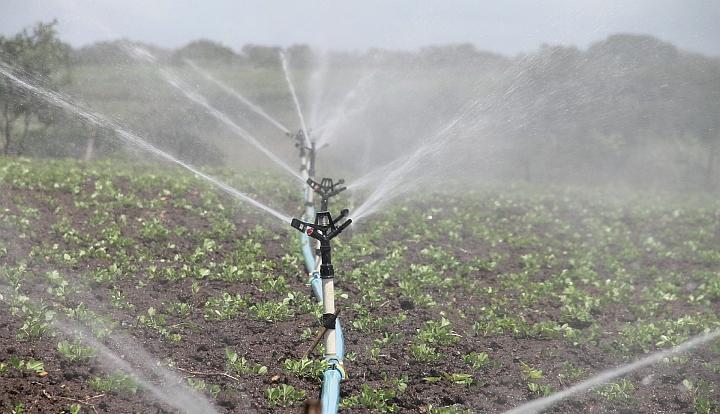 System spryskiwaczy, z których tryska woda strumieniami i podlewa małe sadzonki na polu