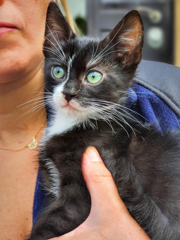 Kot ze schroniska w Celetynowie. Czaruś o czarnej, podpalanej sierści i białawym pyszczku