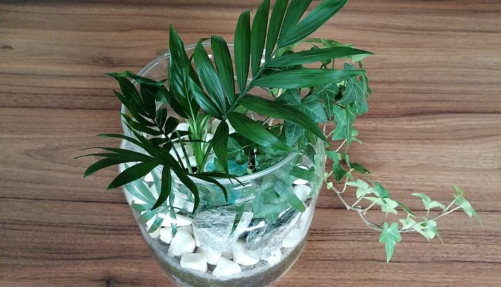 Słoik wypełniony zielonymi roślinami. Wystaje wijący się bluszcz.