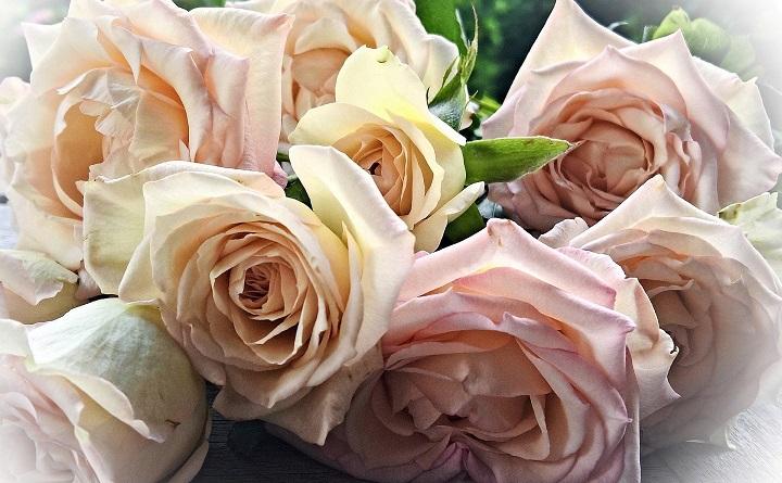 Pęk herbacianych róż
