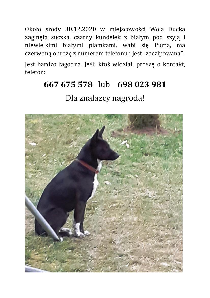 Ogłoszenie o zaginionym psie w Woli Duckiej