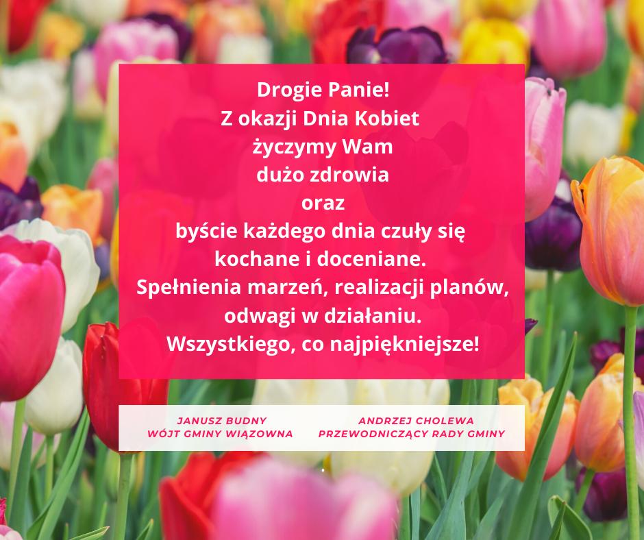 Życzenia na dzień kobiet od wójta Janusza Budnego i przewodniczącego Andrzeja Cholewy. w Tle kolorowe tulipany