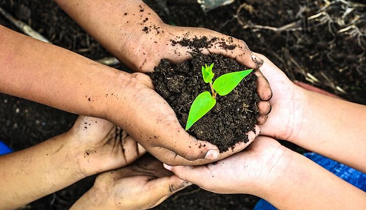 Ręce ubrodzone ziemia trzymają sadzonkę zielonej rośliny
