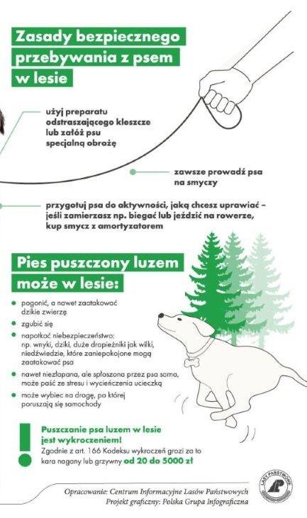 Ulotka informująca, jak zachować się wyprowadzając psa na spacer w lesie
