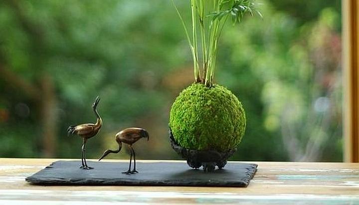 Kokedama jest to nowoczesna metoda ciekawej uprawy roślin doniczkowych.