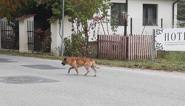 Pies podejrzany o wściekliznę na ulicy